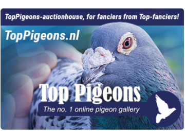 Toppigeons