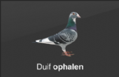Duivenvervoer.nl - Dé duivenkoerier van Nederland